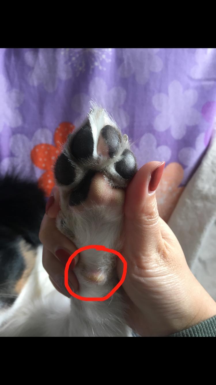狗狗脚底长得这是什么?