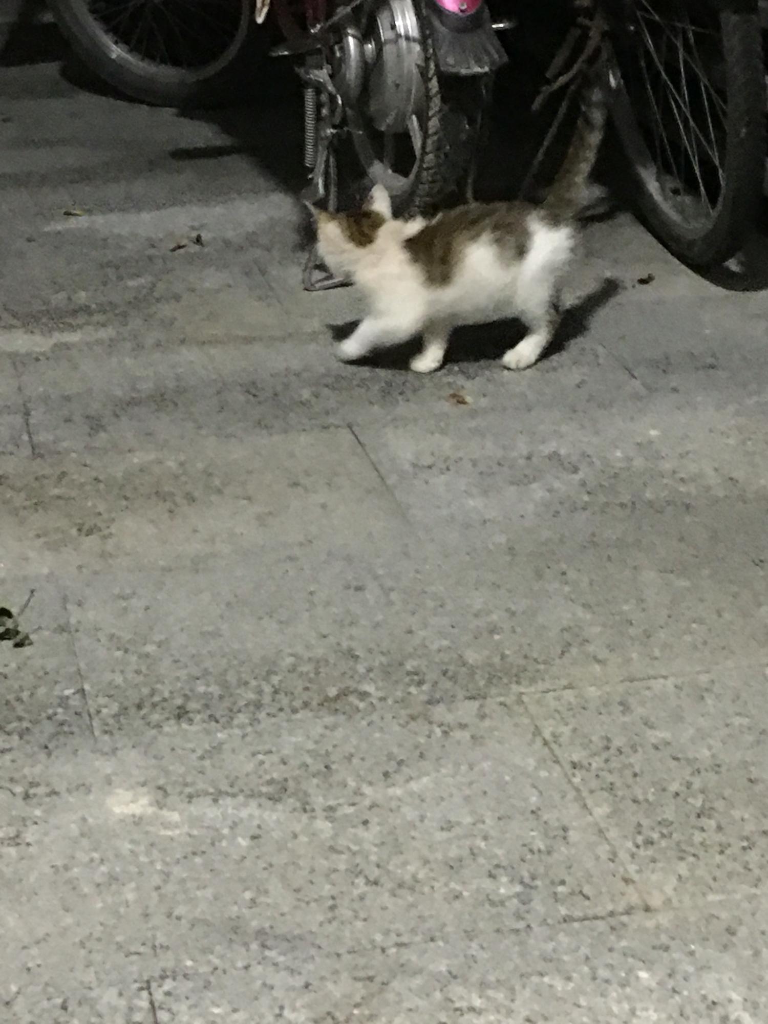 流浪猫领养注意问题