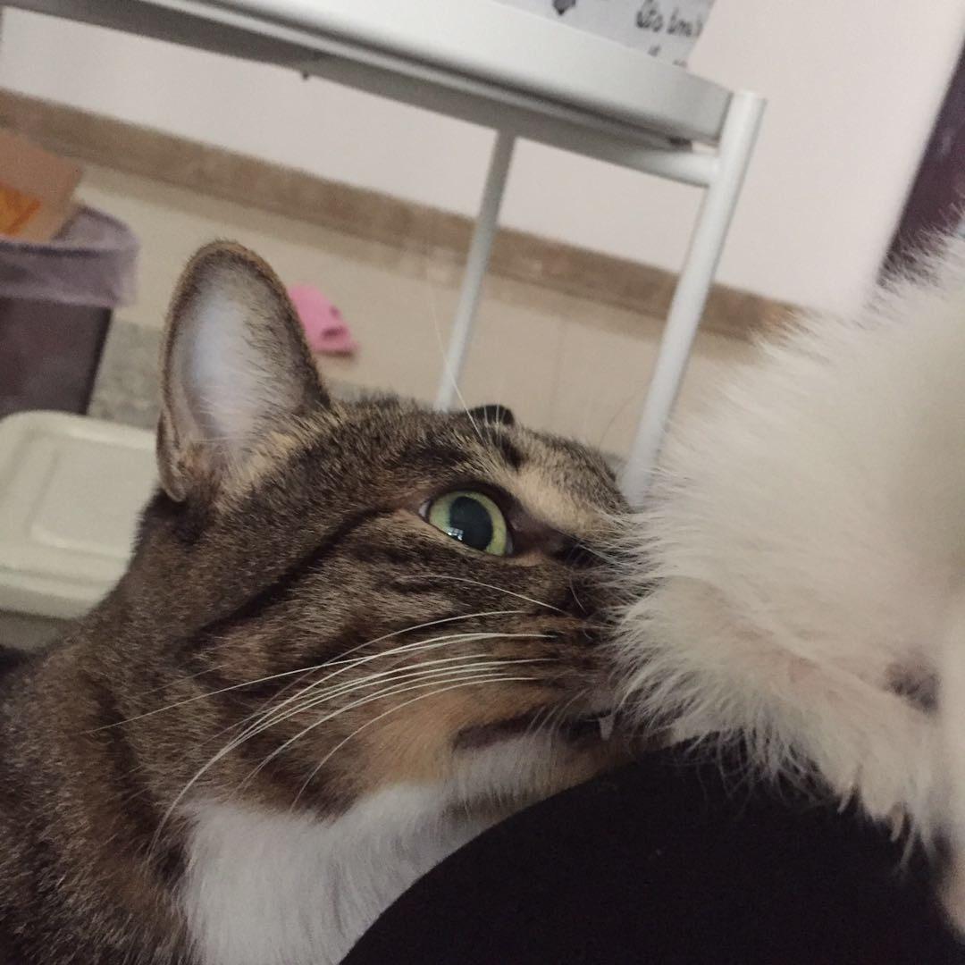 原住民大猫和小猫的交际关系