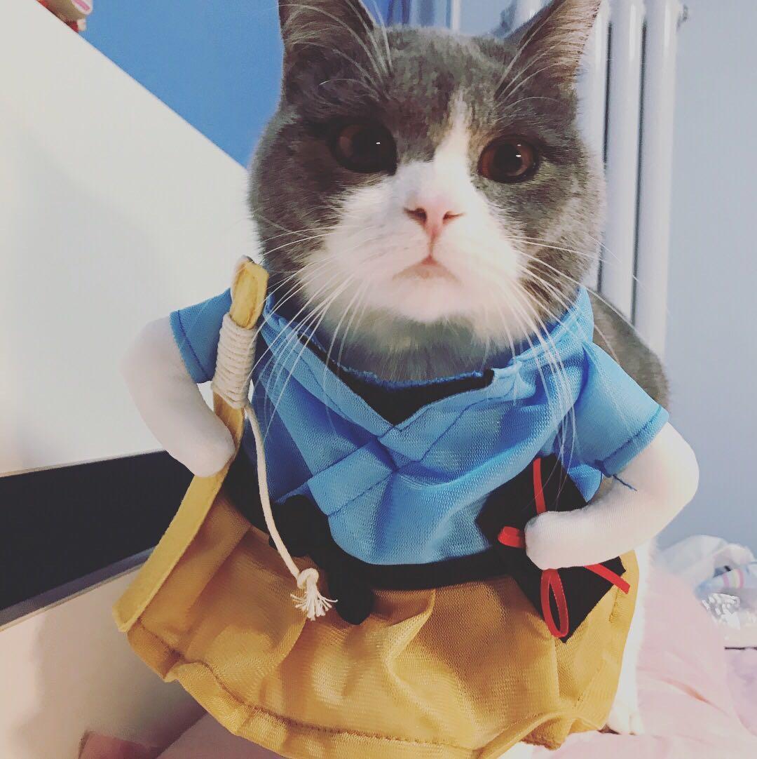 猫用速诺后白细胞增多,去医院后未查明原因