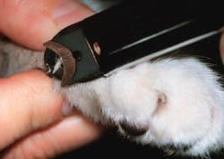 如何安全的给喵星人剪指甲?