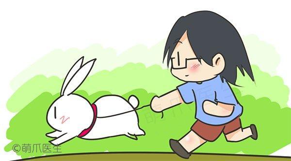 如何破解兔兔的捣蛋行为,和兔兔愉快的玩耍?