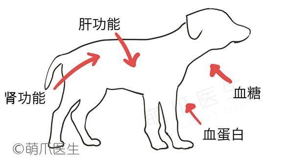 宠物检查小科普 之 身体检查+血检