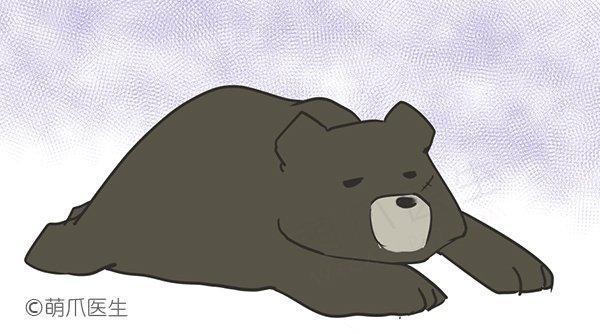 亲历黑熊安乐死:当活熊取胆造成的痛苦,只能通过死亡免除