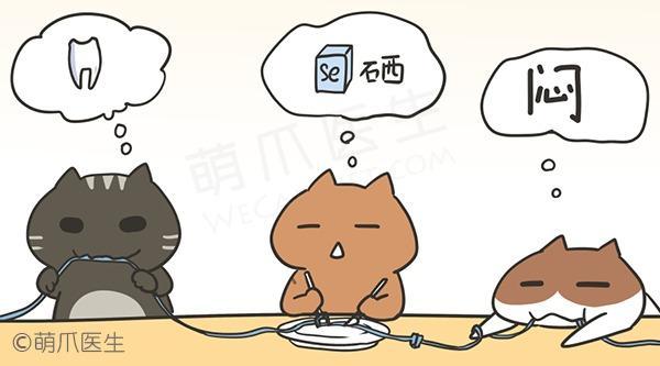 如何从猫咪口中,拯救你的电线?