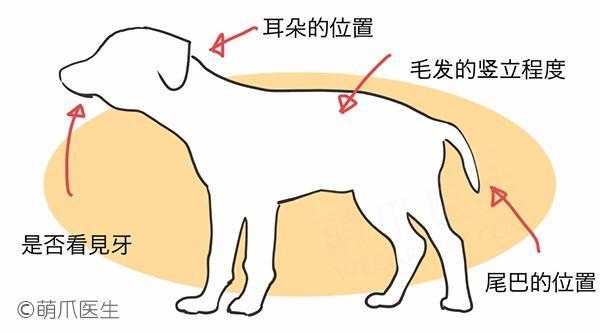 """狗狗会用尾巴""""说话"""",可你看得懂么?"""