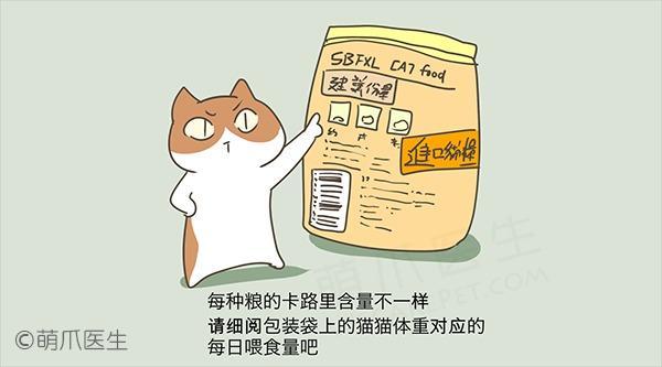 猫奴必看——关于营养的九大疑问