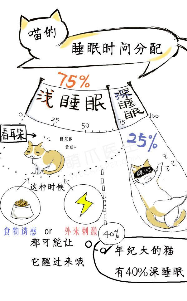 (己插圖)漫画 | 为什么猫咪每天睡很多?