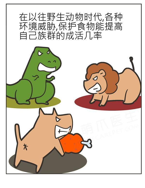 漫画 | 狗狗护食怎么办?