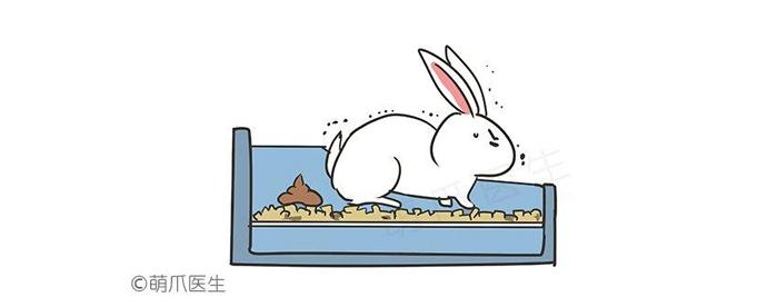 怎么教兔子上厕所?如厕训练全攻略