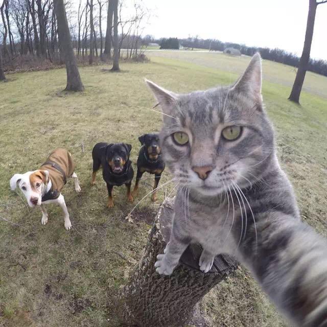 如何成为宠物界网红?——最全网红自拍教程