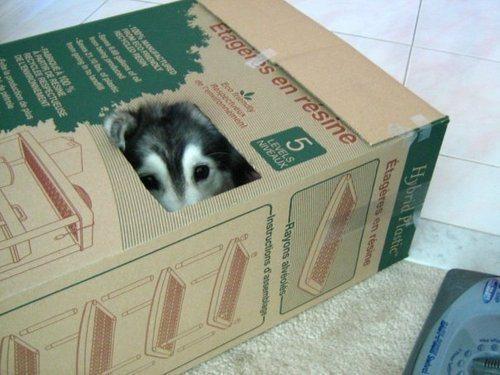 等等!我好像养了条假狗……