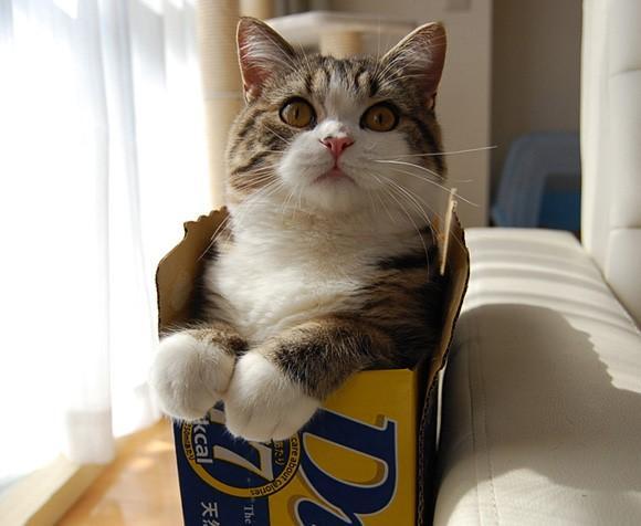 外网10大猫明星,你都认识吗?