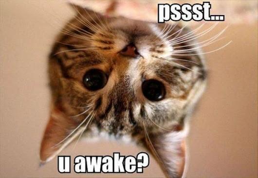 猫这样做你还会爱TA吗?