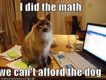 关于猫咪认知的4个事实