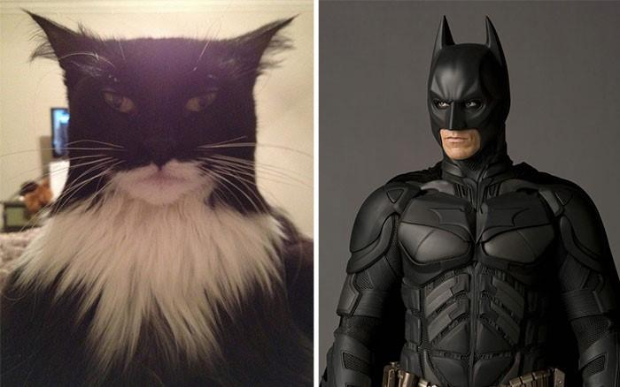 原来猫咪颜艺的潜力大到无法想象