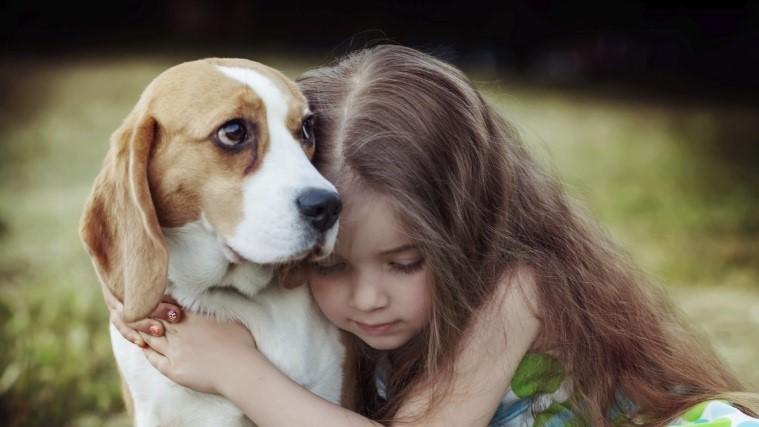 你的狗真的喜欢被抱抱吗?