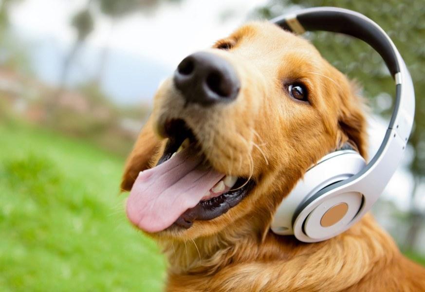 宠物有嘻哈:你家的猫也爱听音乐?