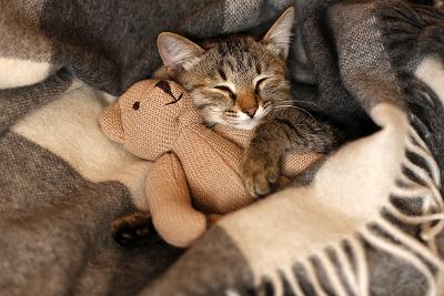猫狗也有睡眠障碍?