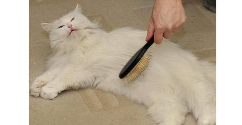 铲屎官,快来给猫咪梳梳梳