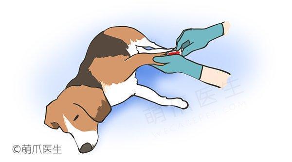 宠物手术注意事项