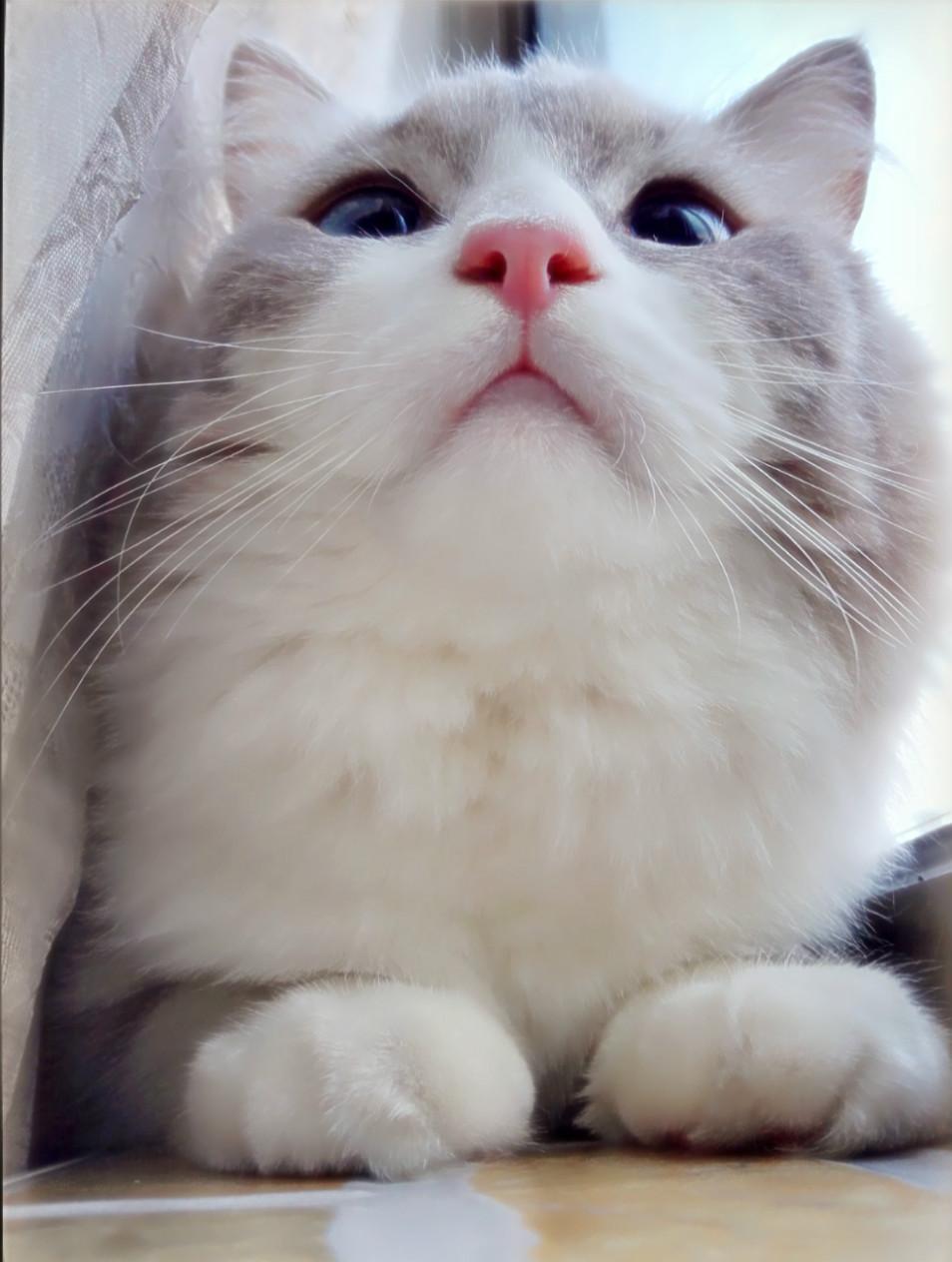 宠物大头照,让美貌近在咫尺!