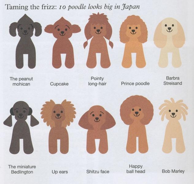 为什么法国人都爱贵宾犬