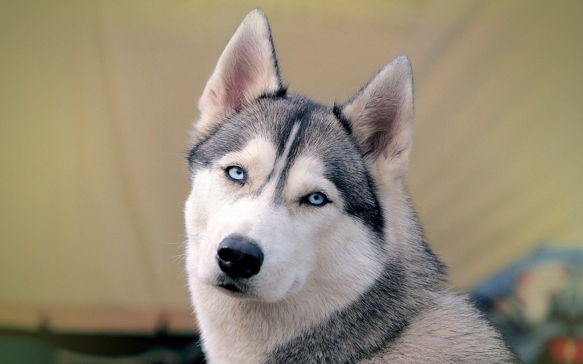 为什么我家的狗狗嘴里总是臭臭的?