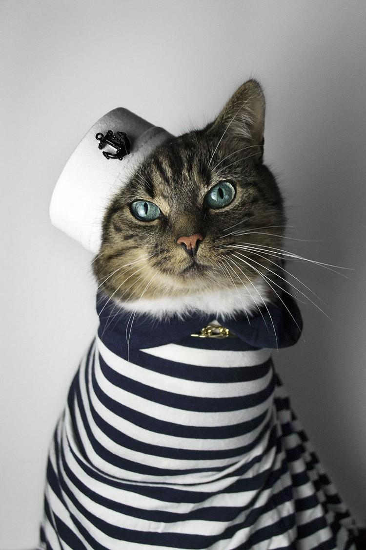 猫究竟是何时沦为人类的宠物的?