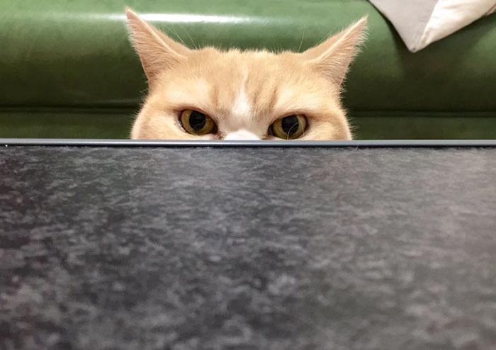 叫猫猫不应,是装傻还是真傻?