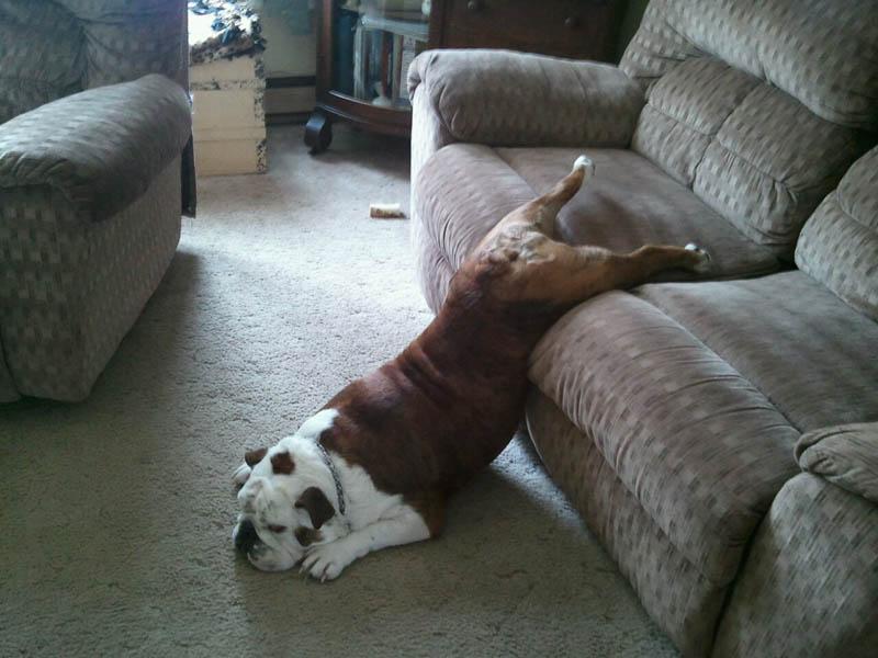 狗狗也会做梦嘛?