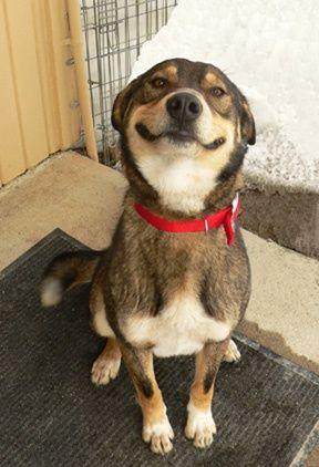 狗狗便便转圈究竟在讲究什么?