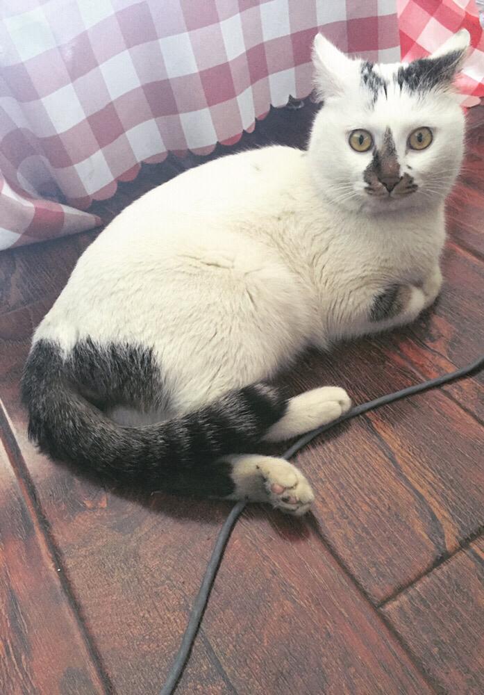 求助刚领养的猫习惯吃人吃的 不吃猫粮怎么办?
