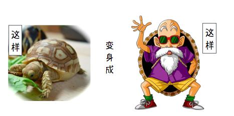 龟仙人de私密空间之如何分辨各种龟龟