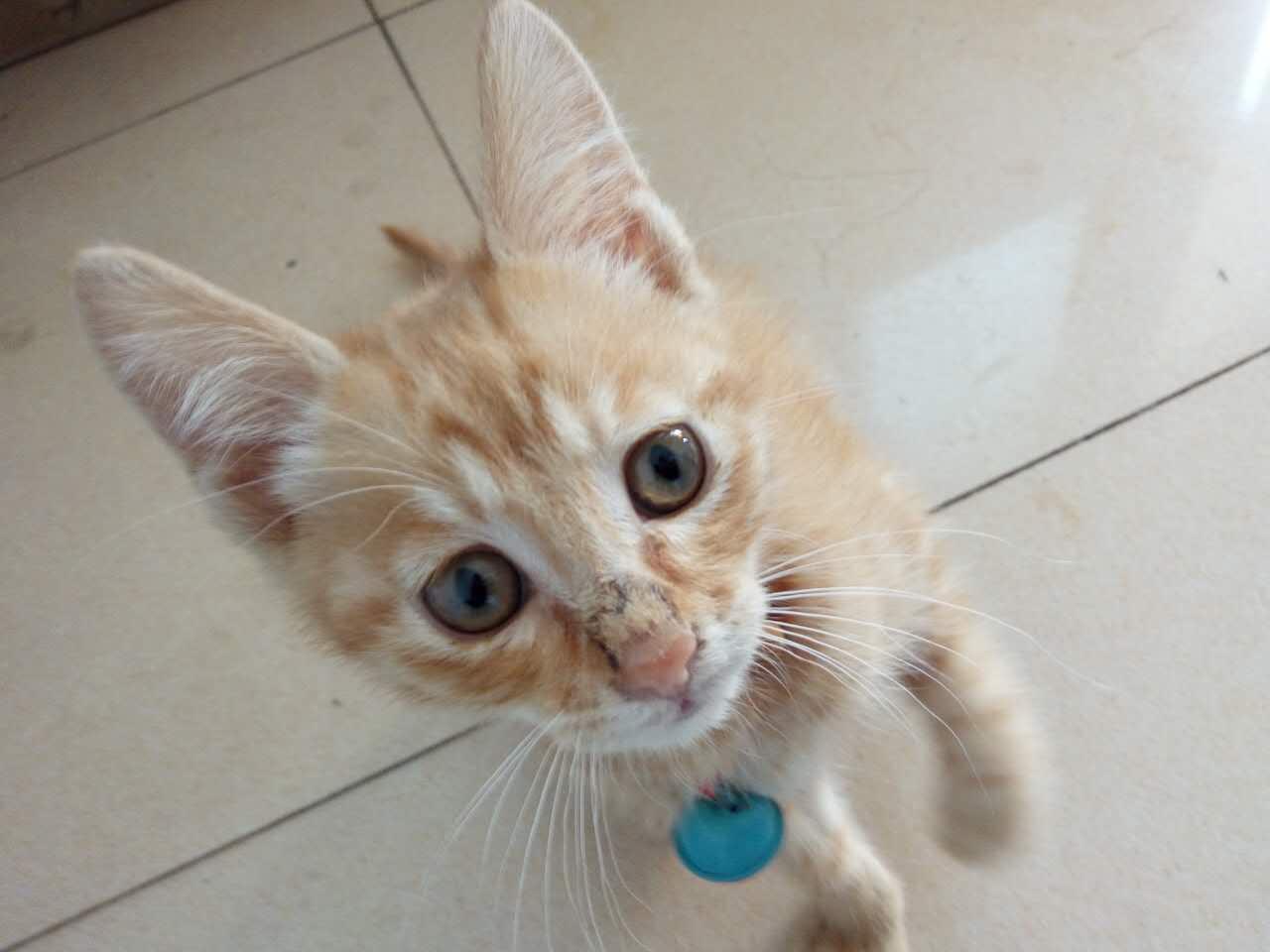 猫咪鼻子黑了一圈,有网友说是猫藓,请帮忙看下。