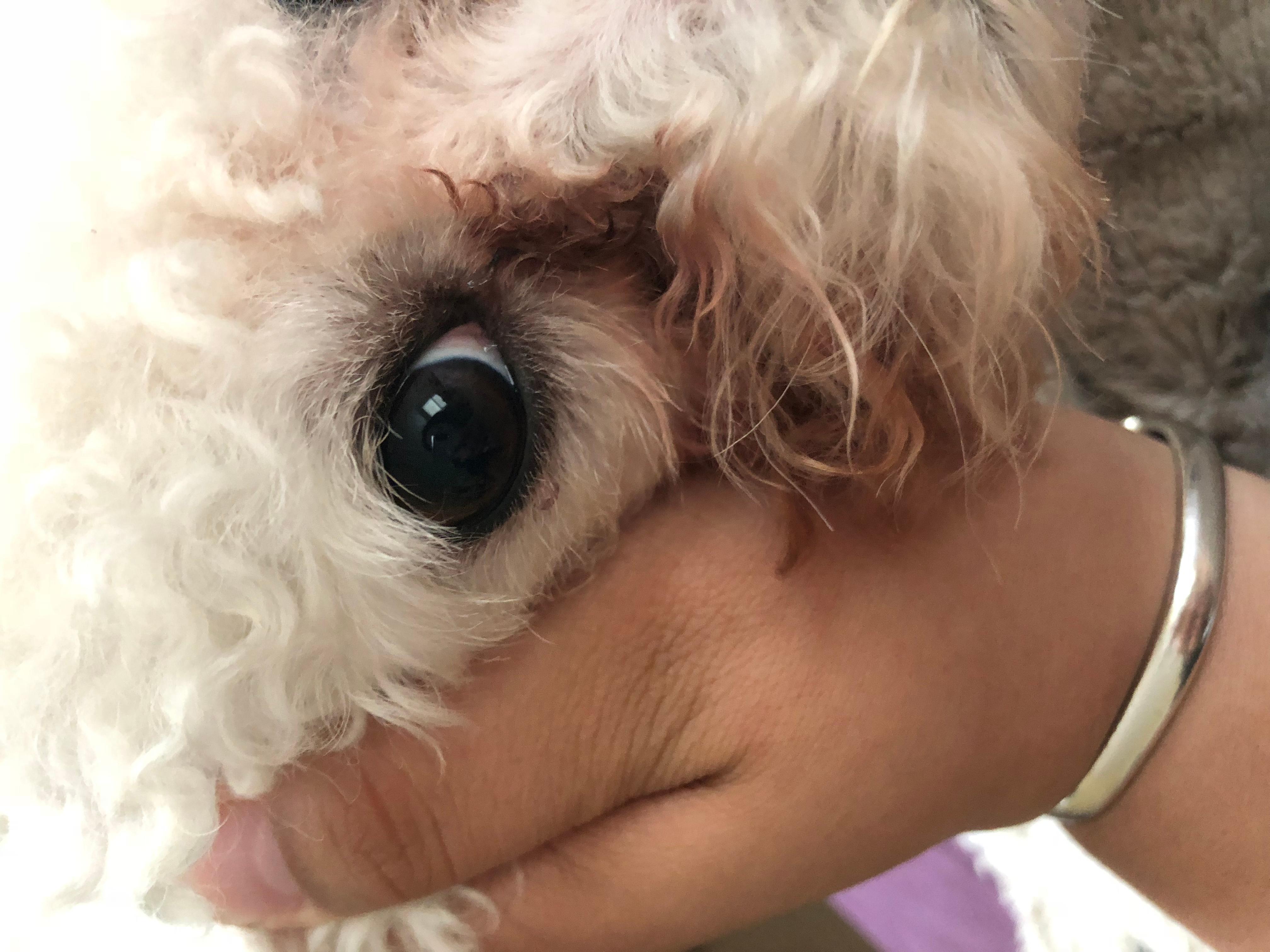 眼睛下起像针眼一样的东西