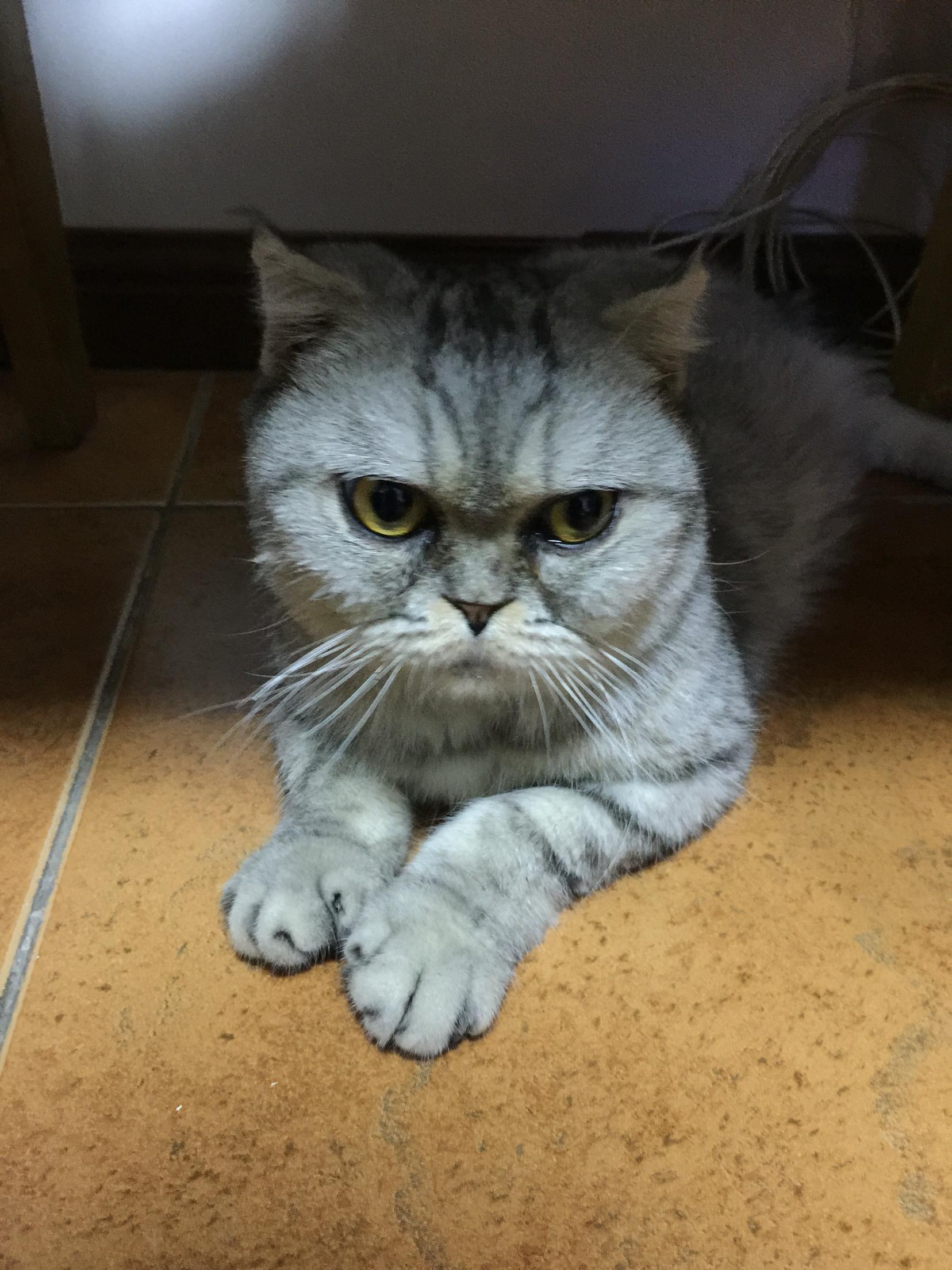 猫趴下呼噜的声音怎么回事