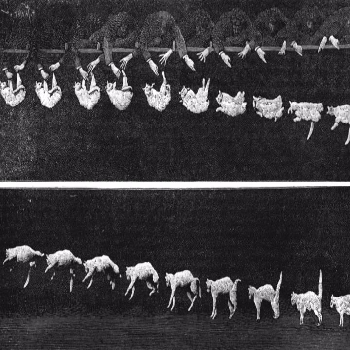 为什么说猫有九条命?源于它超赞的翻正反射技能