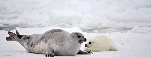 母亲节特辑:动物界那些伟大的母亲们