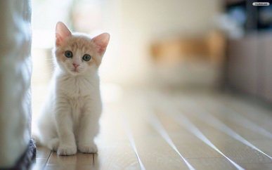 萌爪DIY:看我变变变,毛衣变猫窝