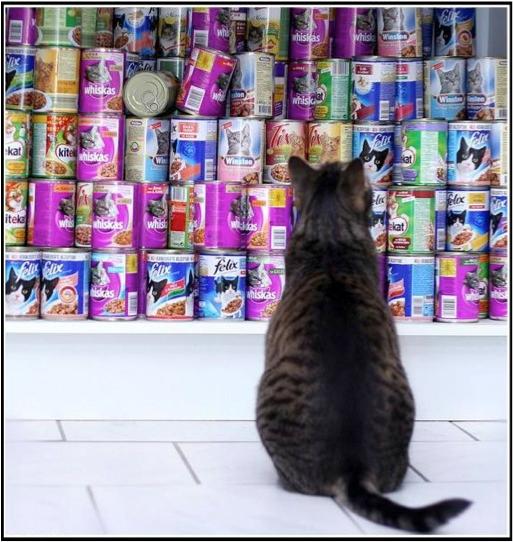 胖猫减肥大作战!