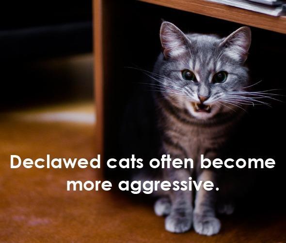 给猫去爪:请不要用爱的名义伤害
