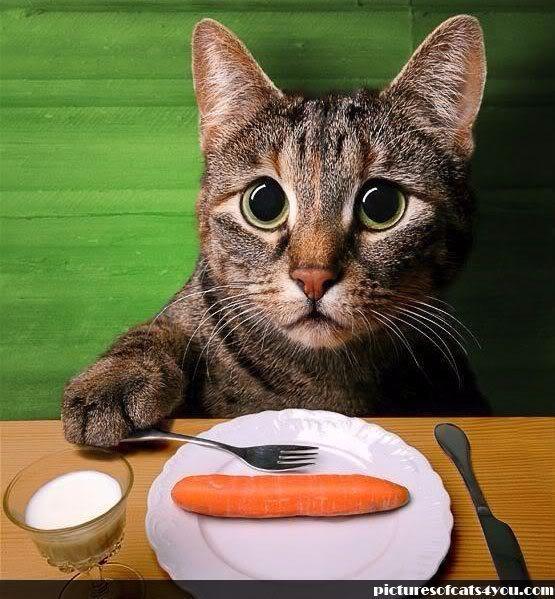 【已编辑】【已审核】肉类副产品:你究竟是个什么鬼