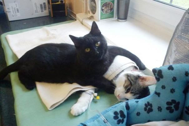 猫奴基础课:猫咪的十大常见疾病