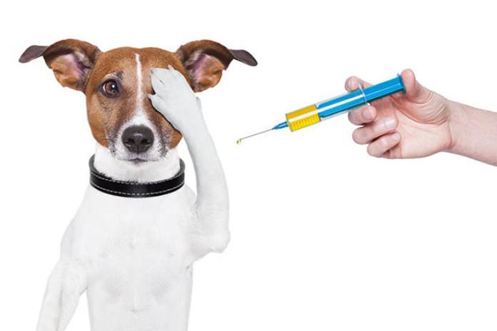 有了宠物后就是买买买?来看看怎么科学的省钱