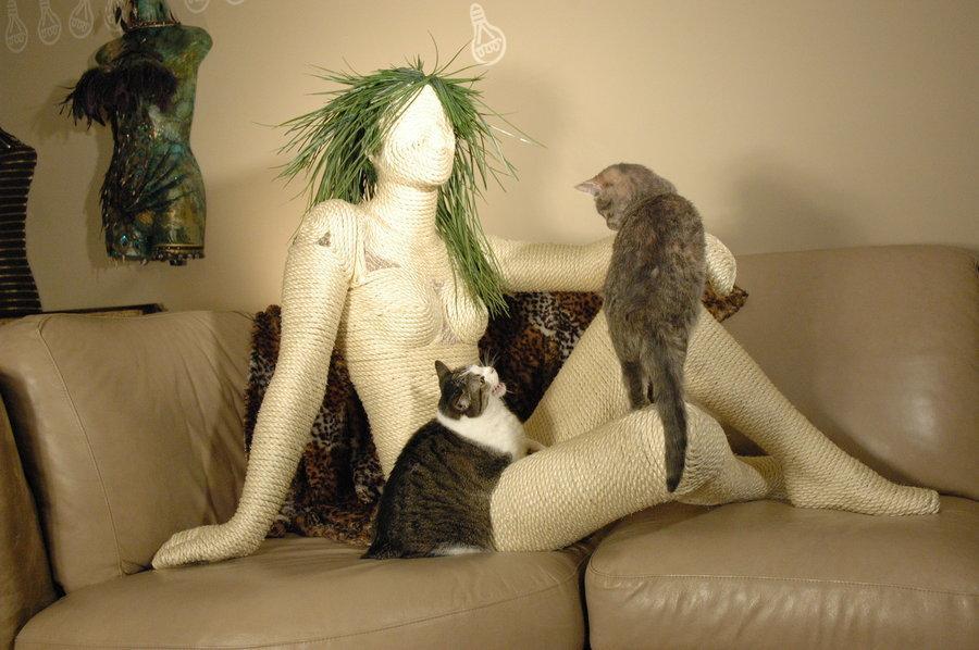 抓家居、咬毛毯、啃植物…你家喵星人的破坏行为有解啦!