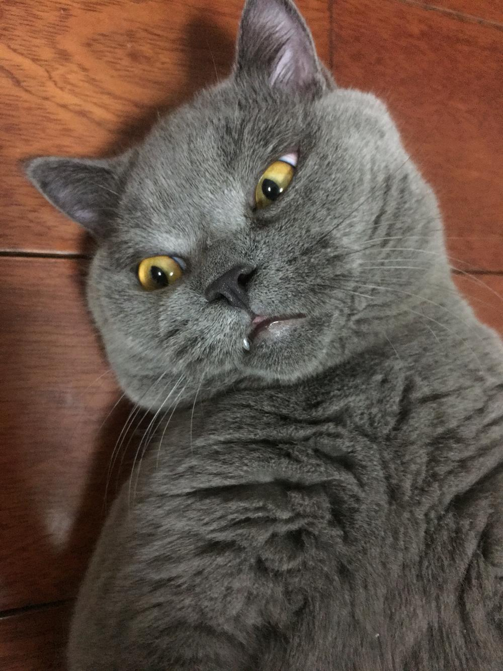 壁纸 动物 猫 猫咪 小猫 桌面 1000_1334 竖版 竖屏 手机