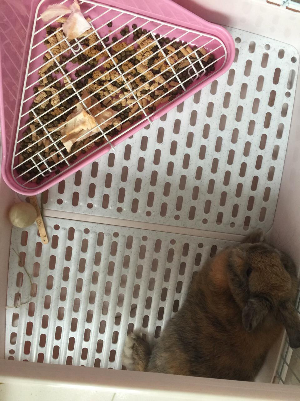 兔子不愿意上厕所