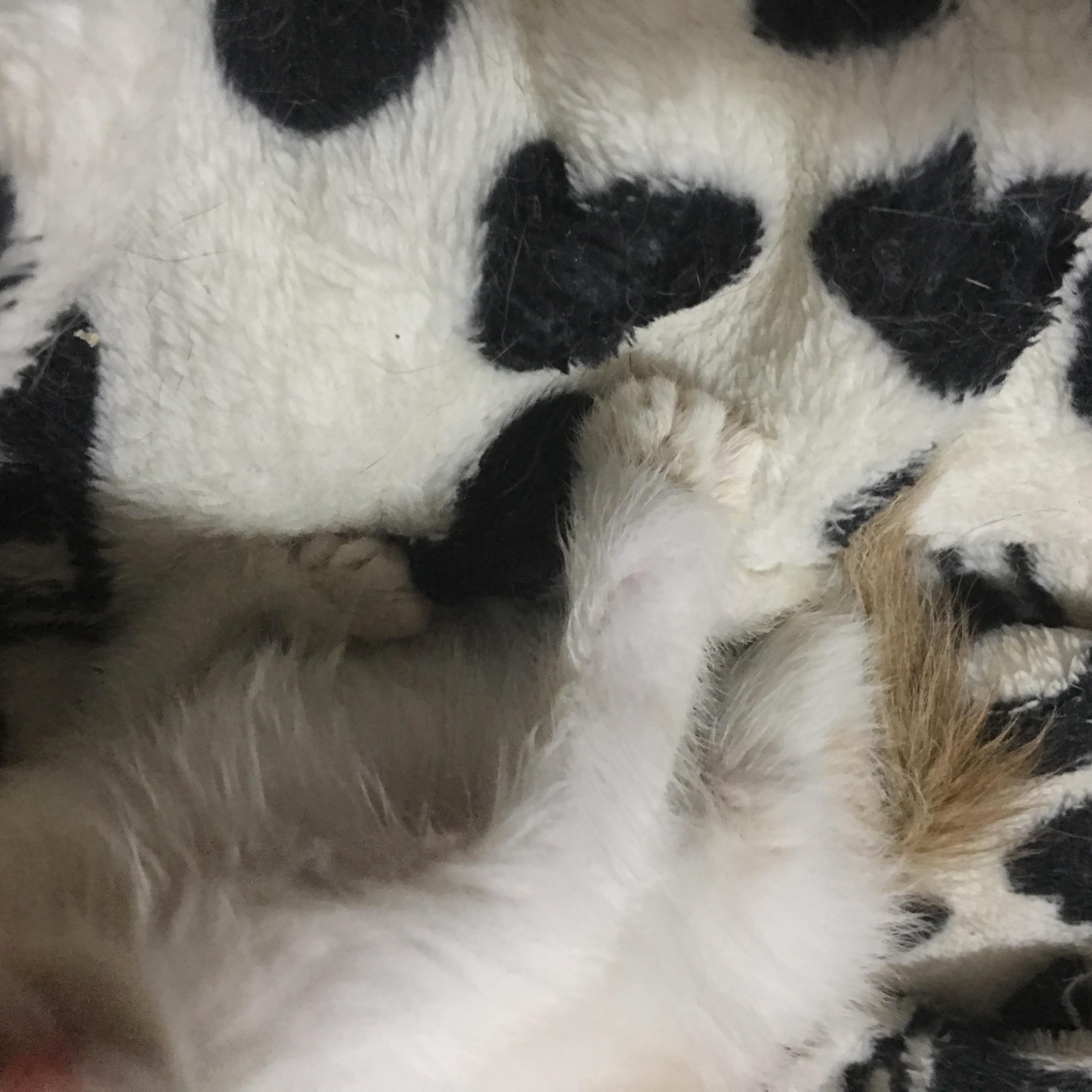 猫爪子突然很奇怪