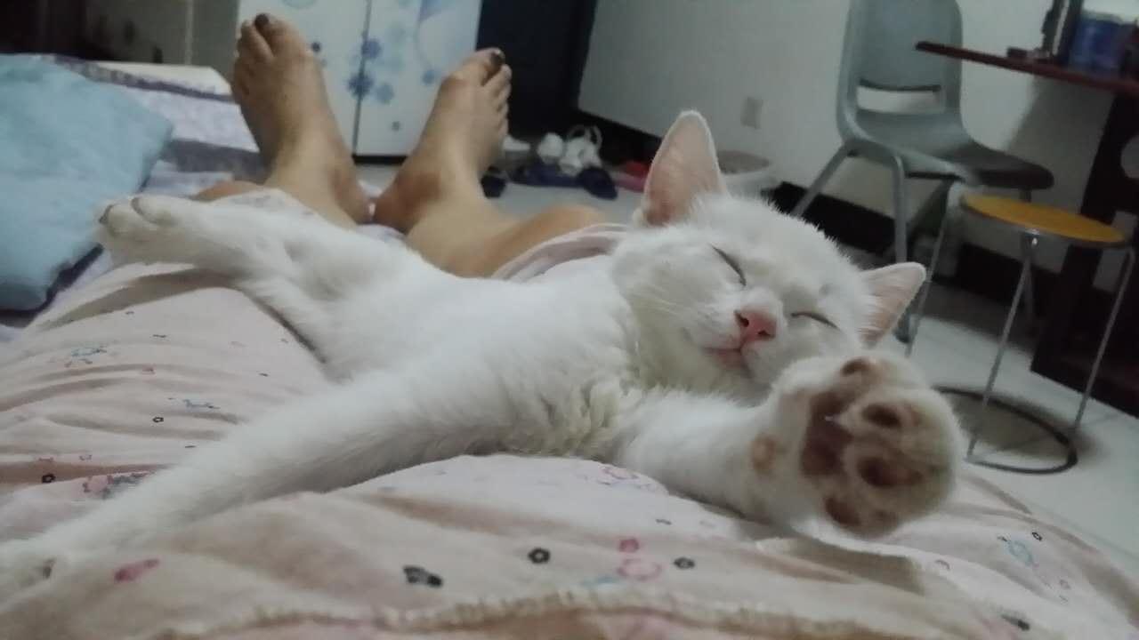 帮我百度一下小猫可爱的样子